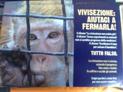 TRENTO - 03.03.2012 - TAVOLO INFORMATIVO SUGLI ORRORI DELLA VIVISEZIONE 28