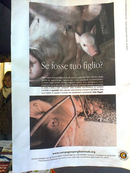 TRENTO 14.01.12 - TAVOLO INFORMATIVO SULL'ANTISPECISMO E LA CULTURA DEL DOMINIO 66