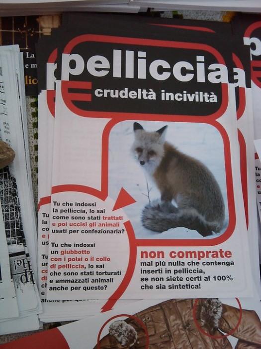 TAVOLO INFORMATIVO SULLE PELLICCE - TRENTO 26.02.2011 27