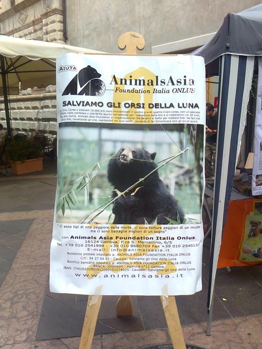 TAVOLO ANIMALS ASIA DEL 16.07.2011 34