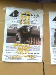 TAVOLO ANIMALS ASIA DEL 16.07.2011 16