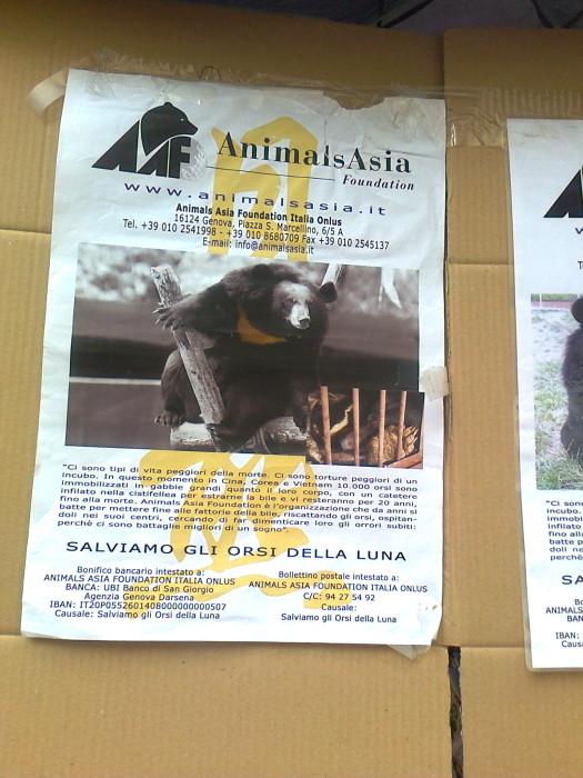 TAVOLO ANIMALS ASIA DEL 16.07.2011 36