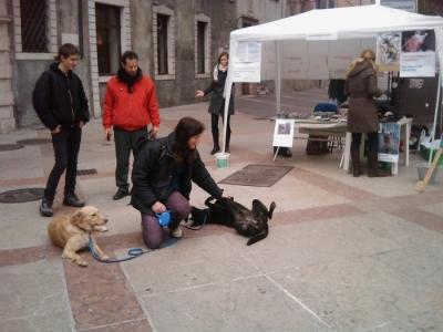 TRENTO - 12.03.2011 - TAVOLO INFORMATIVO SULLA VIVISEZIONE 10