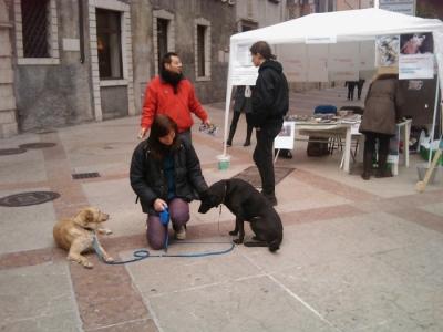 TRENTO - 12.03.2011 - TAVOLO INFORMATIVO SULLA VIVISEZIONE 14