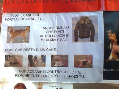 TRENTO - TAVOLO INFORMATIVO CONTRO IL COMMERCIO DI PELLICCE E PIUMINI D'OCA 38