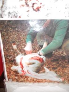 03 dicembre 2011 Trento fiaccolata per denunciare lo sterminio degli animali nel periodo natalizio (e non solo!) 115