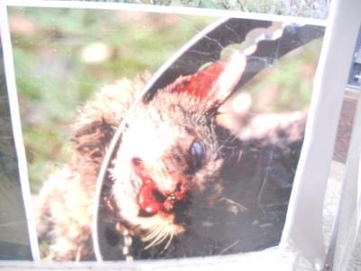 03 dicembre 2011 Trento fiaccolata per denunciare lo sterminio degli animali nel periodo natalizio (e non solo!) 155