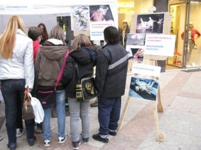 TRENTO - 12.03.2011 - TAVOLO INFORMATIVO SULLA VIVISEZIONE 27