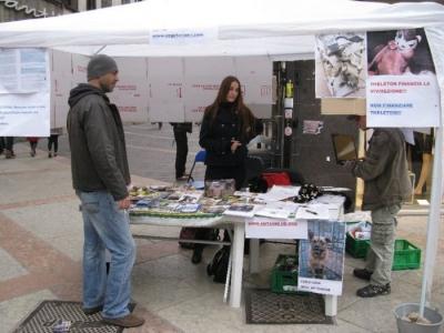 TRENTO - 12.03.2011 - TAVOLO INFORMATIVO SULLA VIVISEZIONE 41