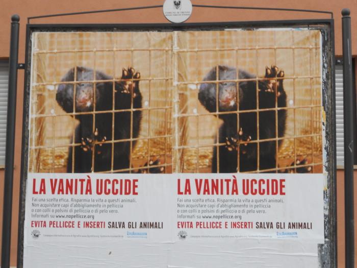 Campagna contro le pellicce - Trento dicembre 2012 26