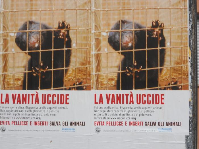 Campagna contro le pellicce - Trento dicembre 2012 27