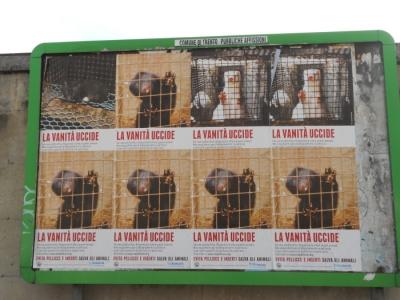 Campagna contro le pellicce - Trento dicembre 2012 7