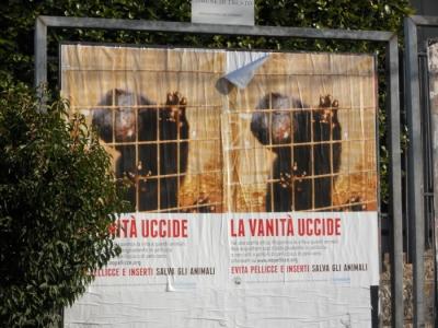 Campagna contro le pellicce - Trento dicembre 2012 9