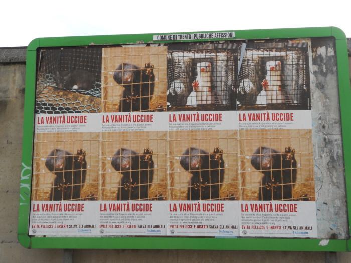 Campagna contro le pellicce - Trento dicembre 2012 32