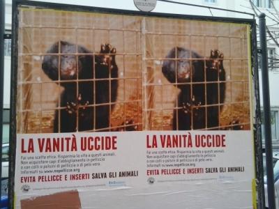 Campagna contro le pellicce - Trento dicembre 2012 1