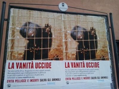 Campagna contro le pellicce - Trento dicembre 2012 16