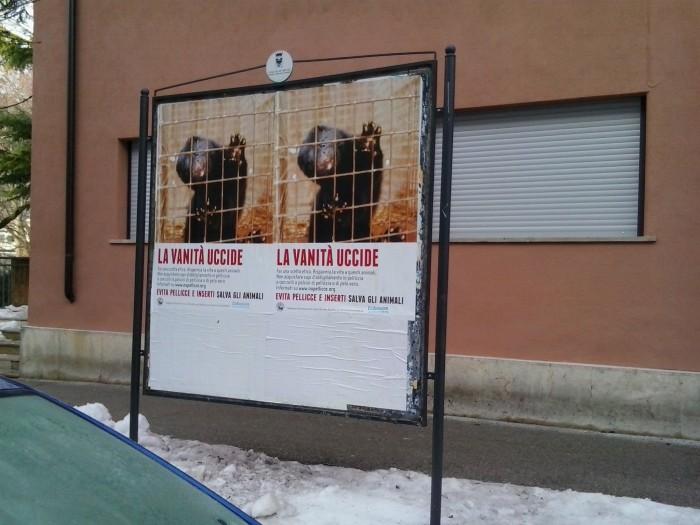 Campagna contro le pellicce - Trento dicembre 2012 38