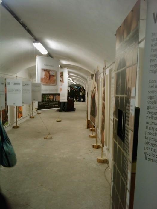 VEGAN FEST 2011- 22/25 APRILE - CAMARIORE 503