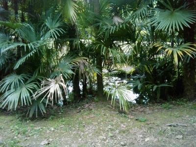 VEGAN FEST 2011- 22/25 APRILE - CAMARIORE 5