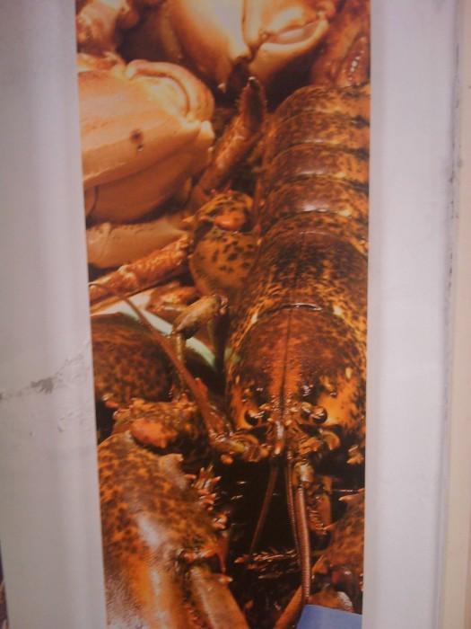 VEGAN FEST 2011- 22/25 APRILE - CAMARIORE 270