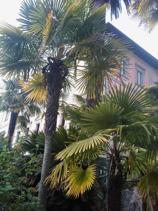 VEGAN FEST 2011- 22/25 APRILE - CAMARIORE 324