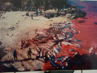 VEGAN FEST 2011- 22/25 APRILE - CAMARIORE 96