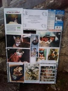 VEGAN FEST 2011- 22/25 APRILE - CAMARIORE 135