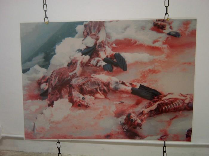 VEGAN FEST 2011- 22/25 APRILE - CAMARIORE 407
