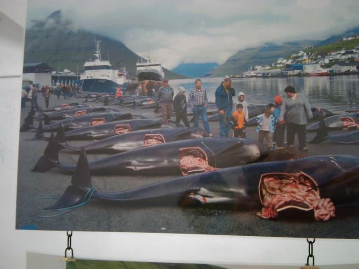 VEGAN FEST 2011- 22/25 APRILE - CAMARIORE 415