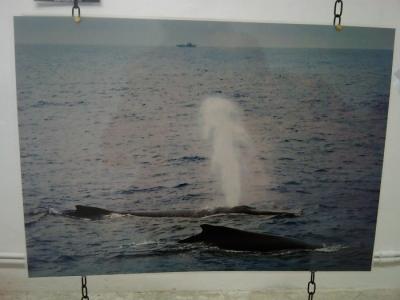 VEGAN FEST 2011- 22/25 APRILE - CAMARIORE 162