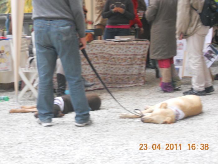VEGAN FEST 2011- 22/25 APRILE - CAMARIORE 437