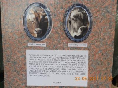 TAVOLO ANIMALS ASIA - Giavera del Montello (TV) - 22 maggio 92