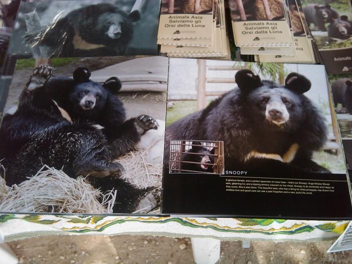 TAVOLO ANIMALS ASIA - Giavera del Montello (TV) - 22 maggio 230