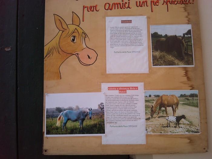 TAVOLO ANIMALS ASIA - Giavera del Montello (TV) - 22 maggio 248