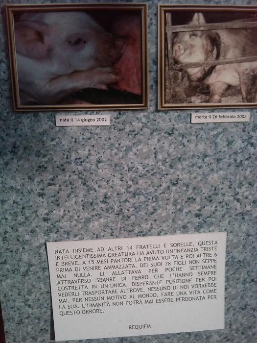 TAVOLO ANIMALS ASIA - Giavera del Montello (TV) - 22 maggio 134