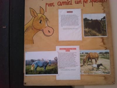 TAVOLO ANIMALS ASIA - Giavera del Montello (TV) - 22 maggio 20