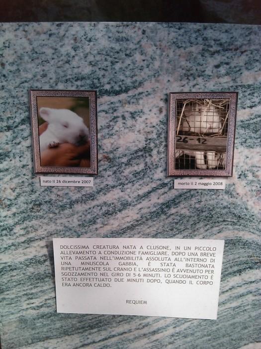 TAVOLO ANIMALS ASIA - Giavera del Montello (TV) - 22 maggio 159