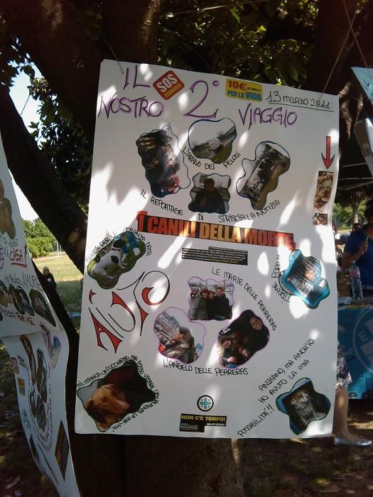TAVOLO ANIMALS ASIA - Giavera del Montello (TV) - 22 maggio 171