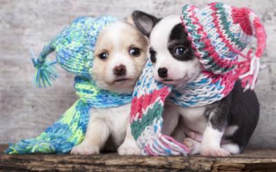 Come curare il raffreddore del cane 10