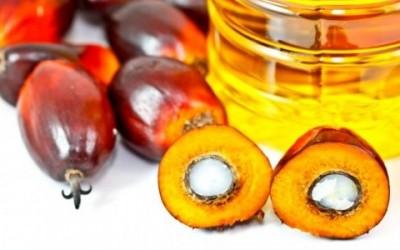 L'olio di palma fa male: effetti su salute e ambiente 4