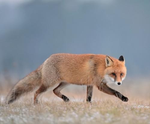 beautiful-wildlife: RudybyRobert Babisz 10