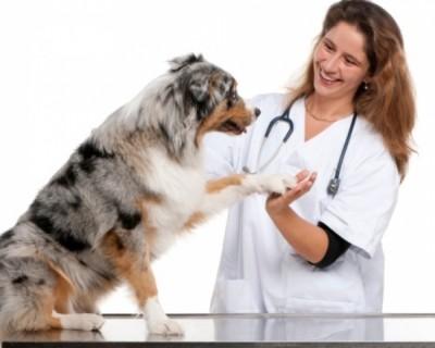 I medici veterinari_f6425554547d2523211b7d035744ef72