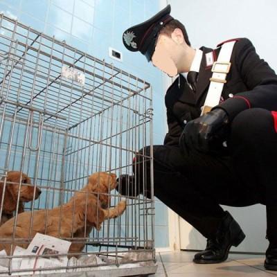 IL SEQUESTRO IMMEDIATO DI UN ANIMALE_8eadb70d240aabc83cd0419cd1e72fbf