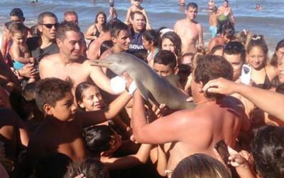Un delfino e uno squalo morti per la smania di popolarità, che genera mostri di egoismo 6