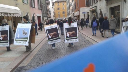 Manifestazione a Trento in difesa degli agnelli a Pasqua 24-25-26 Marzo 15