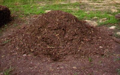 Come fare il compost: la guida al compostaggio domestico 6