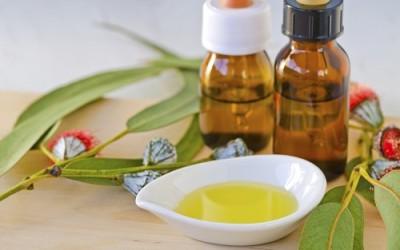 Olio essenziale eucalipto: proprietà e utilizzi 4