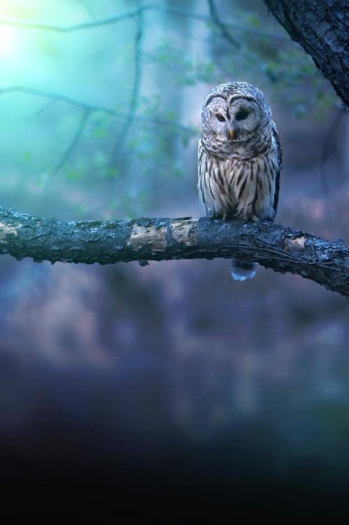 robert-dcosta: Solitude || © || 18