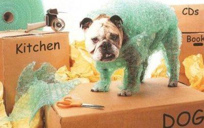 Come traslocare con gli animali domestici: idee e consigli 5