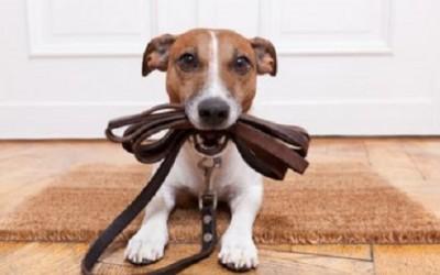Come educare un cane: ecco le cose che un padrone non dovrebbe mai dire! 19